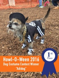 Howl-O-Ween @ Pacific Dog Park | Santa Monica | California | United States