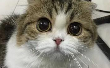 5 Syurga Pencinta Kucing Wajib Dikunjungi | Cafe Kucing