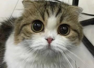 5 Syurga Pencinta Kucing Wajib Dikunjungi   Cafe Kucing