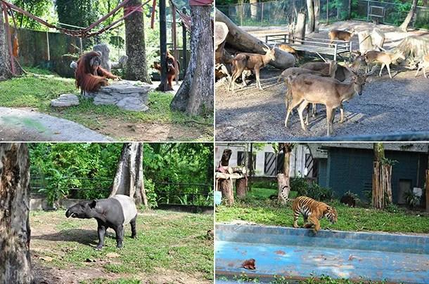 Program Sukarelawan Zoo Negara - Image 4