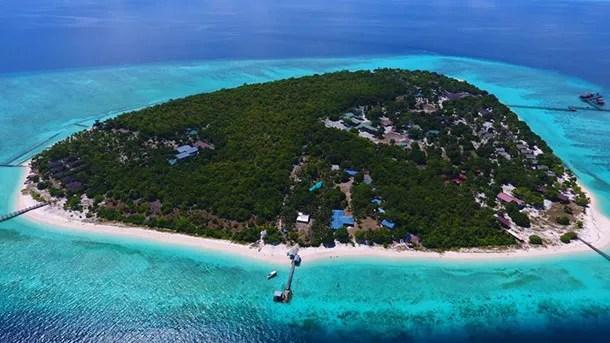 Pom Pom Island 2