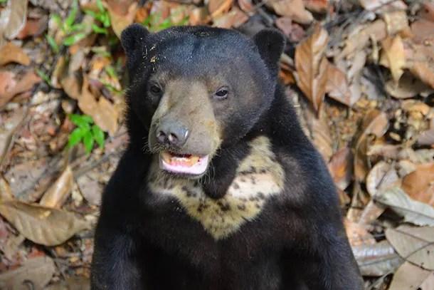 Borneo Sun Bear Conservation Centre