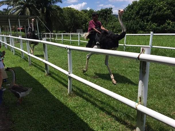 Jelita Ostrich Farm Seremban