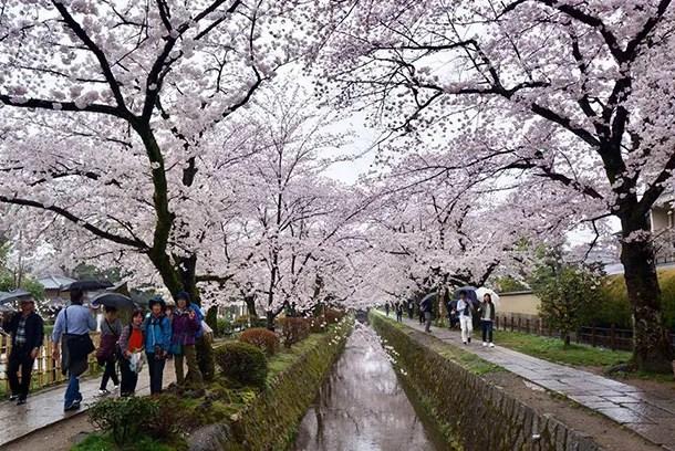 Philosophers Walk Kyoto