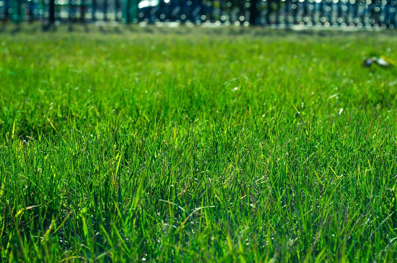 Une belle pelouse