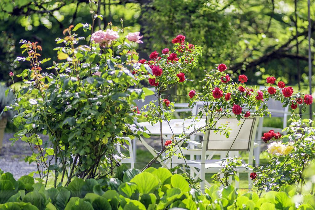 comment decorer son jardin maison