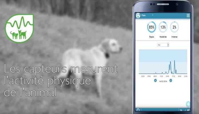 Collier connecte GPS de chez Eyenimal / Numaxes, IOPP Tracker suiver l'activité de votre animal
