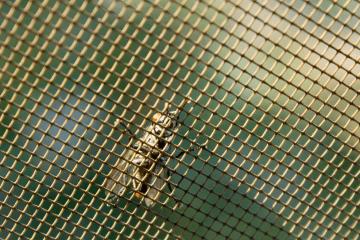 cyrillutz-protection-insectes-maison-et-jardin
