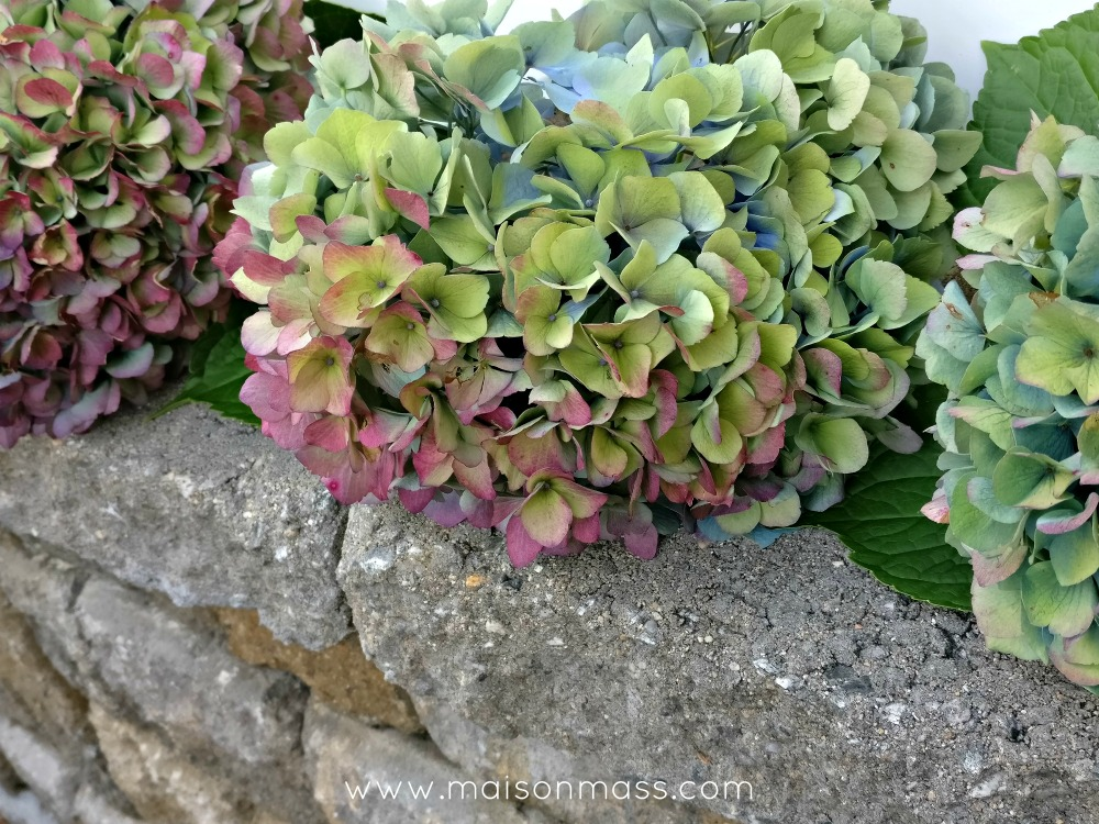if these walls could talk hydrangea line up