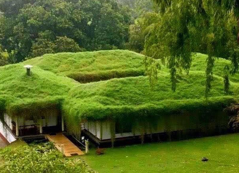 habitat écologique, habitat végétalisé