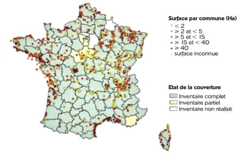 Les roselières en France