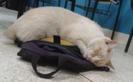branco_dorme