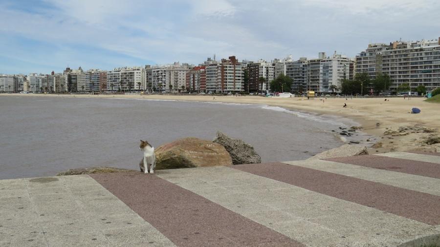 gatorede Um passeio pelas Ramblas de Montevidéu