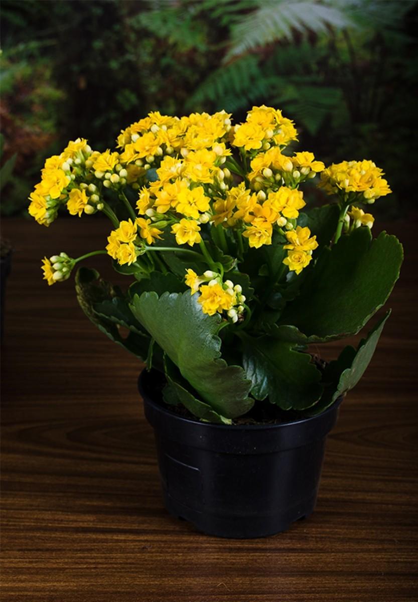 Flores-amarelas-2 Etiqueta  Social ao Redor do Mundo
