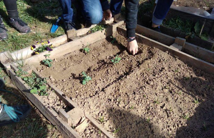 i ragazzi della 2° media Matteotti di Torino eseguono la manutenzione dei loro orti nel cortile della scuola, pulizia delle infestanti e sistemazione dei solchi di irrigazione