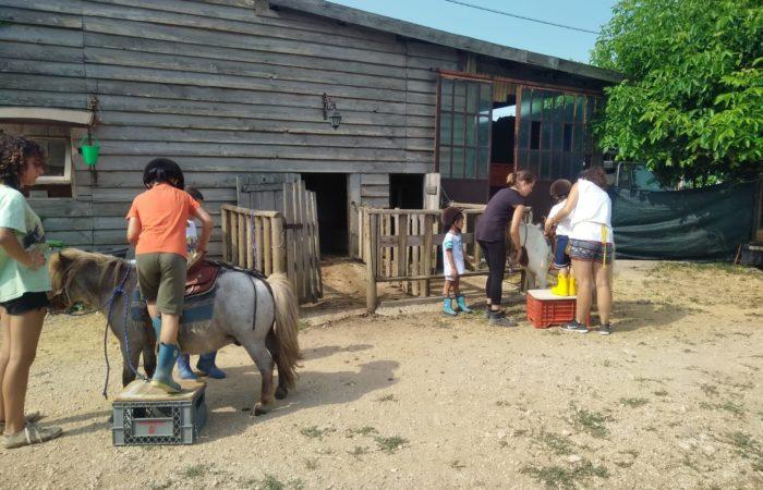 Oplà sul pony