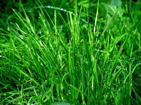 تفسير حلم رؤية الحشيش أو الحشائش أو العشب الأخضر في المنام