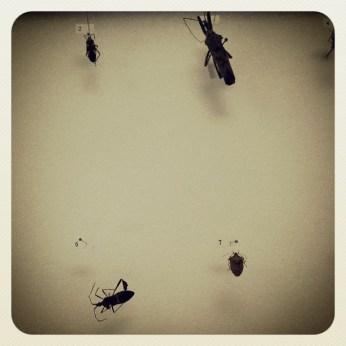 Stink #bug identified