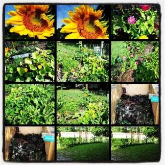 #summer #garden #instagood