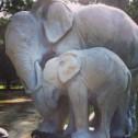 #elephant #beatific