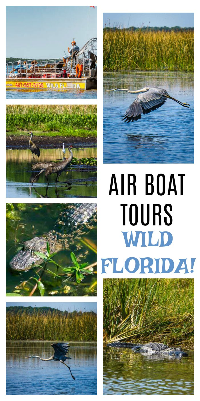 Wild Florida Air Boat Tours. Incredible air boat tour near Orlando, Florida. Bird watchers, alligator spotters and families are left in awe! Florida Travel   Florida Wildlife   Air Boat Tours
