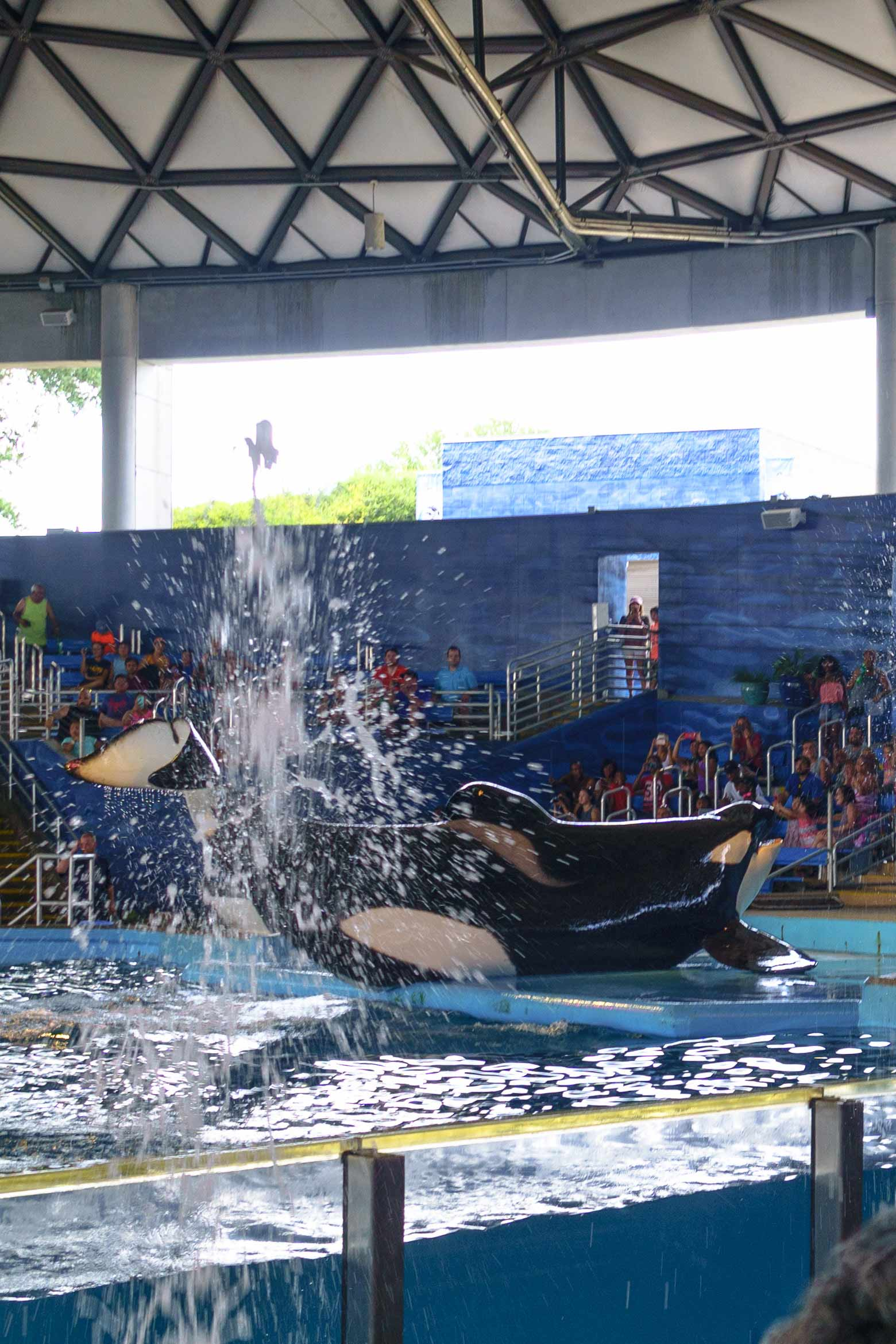 Sea World San Antonio then and now! Come see all the changes the park has made as well as a walk down memory lane!