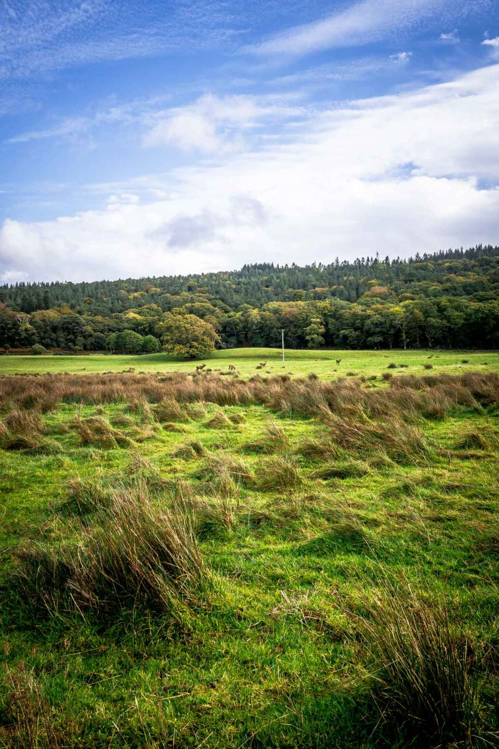 Killarney National Park in the fall with red deer in the fields.