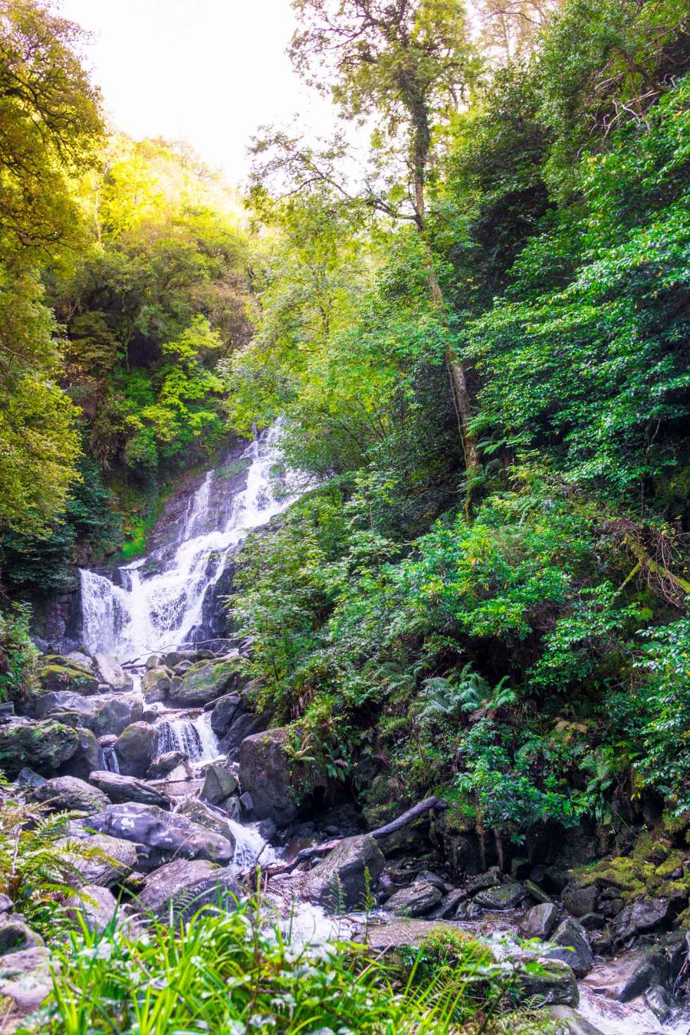Torc waterfall in Ireland. The small Killarney National Park walk is worth the visit to the falls.