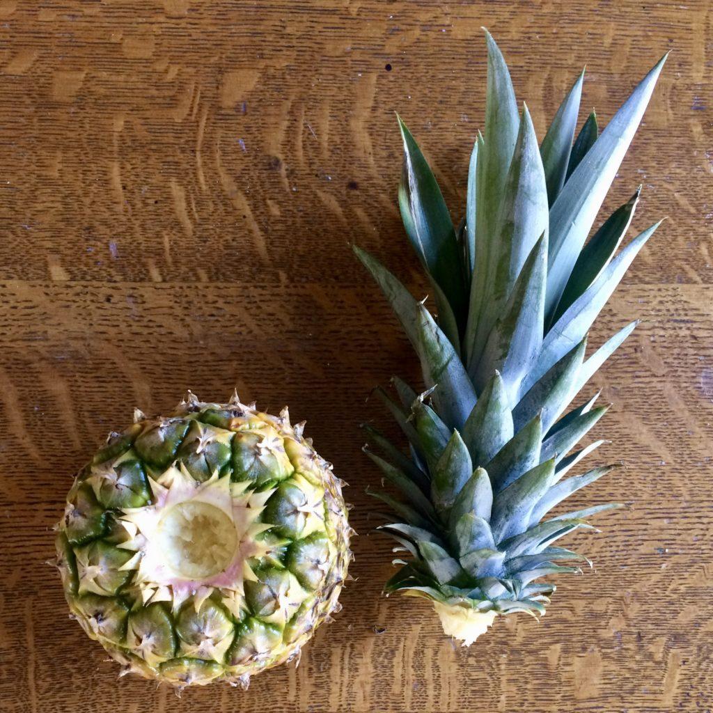 Kitchen Scrap Garden: Growing Pineapple • • Make Ad Lib
