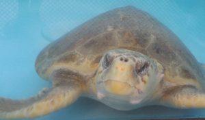 Sea Turtles & Marine Life at Gumbo Limbo