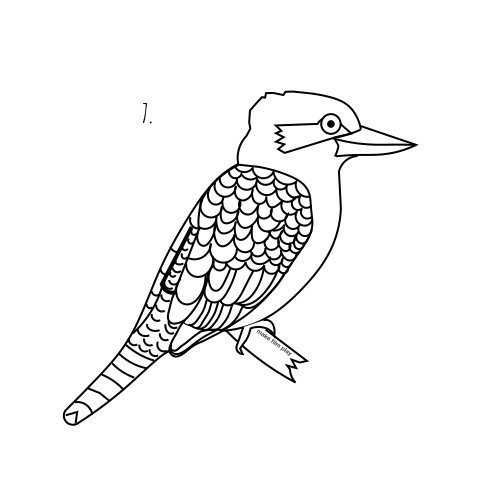How to Draw a Kookaburra