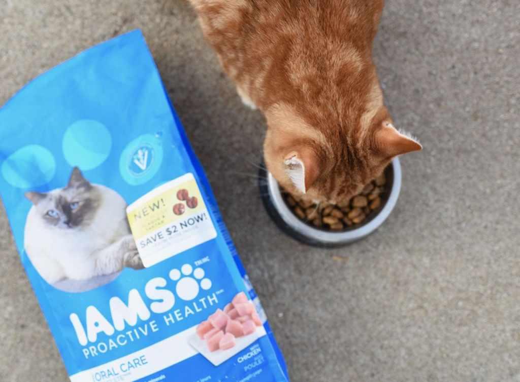 IAMS Proactive Health Oral Care cat food