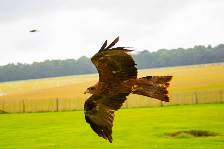 National Centre for Birds of Prey