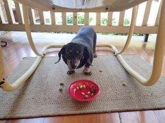 Snack time for Greta!