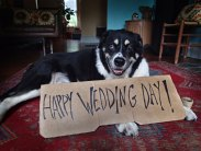 Mollie sent a message to her people who were off getting married.