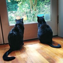 Pip and Luke got a little taste of the world beyond the glass this summer, as their owner moved to DC. We will miss you Pip and Luke -- and of course, Mary too!