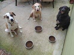 Elliott, Gus, Kofi