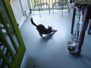 Cosmo is one of the many porch kitties of Cabbagetown that has slowy worked his way into the heart and home of the owner of this porch.
