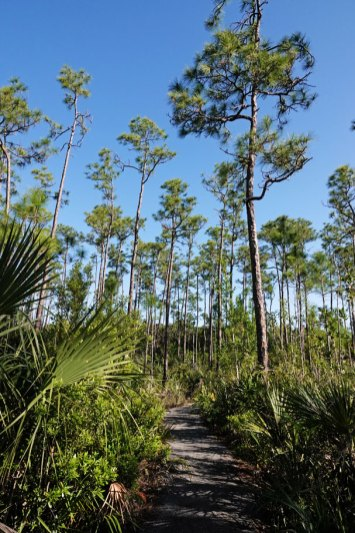 The Pinelands Trail.