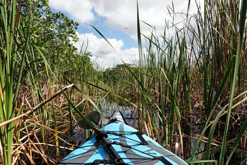 Kayaking through sawgrass, This was one of the places we had to pull ourselves through by hand.