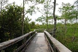 Boardwalk to the Overlook.