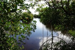 A view from the boardwalk at the Big Cypress Welcome Center.