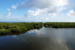 View of the preserve and Tampa Bay.