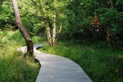 Path at Blue Heron Nature Preserve.