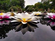 Atlanta Botanical Gardens.