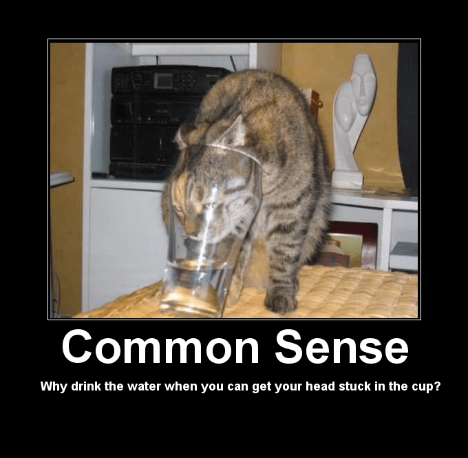 Cat's don't have common sense.