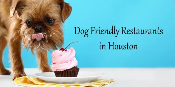 Dog Friendly Restaurants in Houston