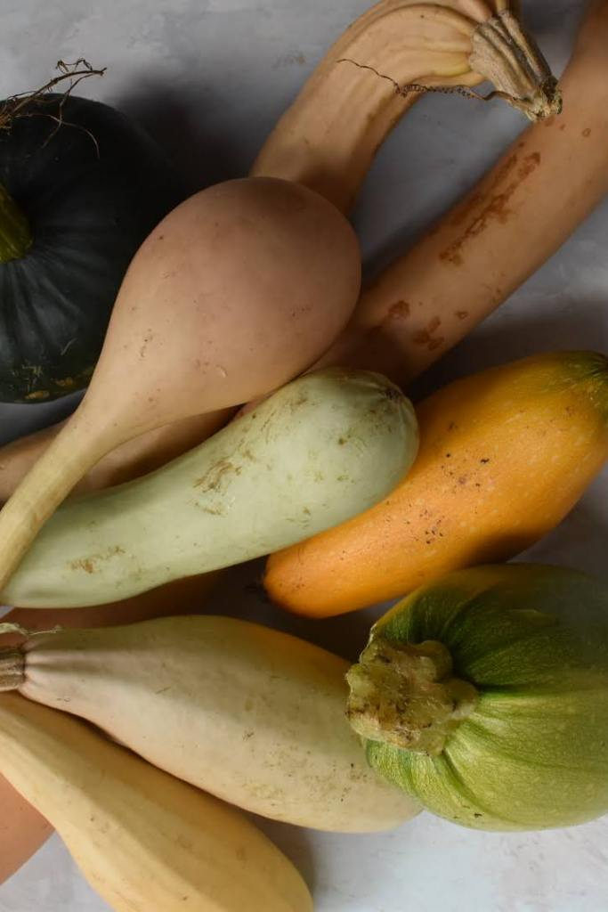 growing and harvesting winter squashes