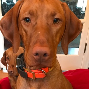 Product Review & Giveaway:  Whistle GPS Pet Tracker