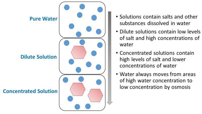 Osmosis of water